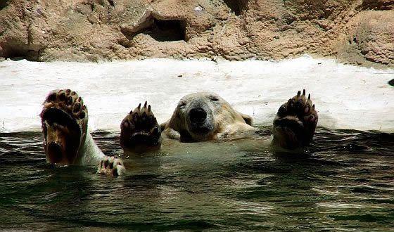 polar-bear-having-a-good-time