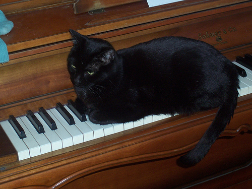 Nora the piano playing cat's cousin?  (image from rochelle, et al on Flickr)