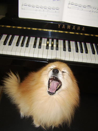 Do you have a musical pet? (image from howangcturtle on Flickr)