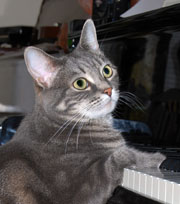 Nora the piano-playing cat (image from Wikipedia)