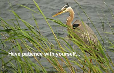 Heron photo by my hubby Belair