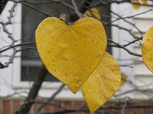 The world is filled with love whereever you look (image from geopungo on Flickr)